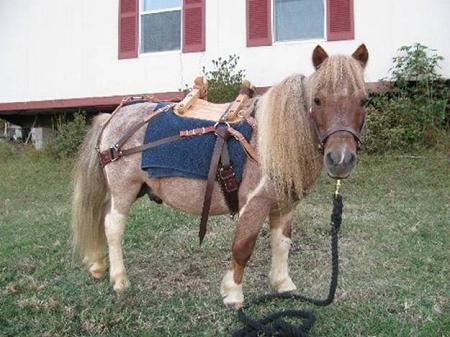 Sawtooth Leather Mini Horse Packsaddle